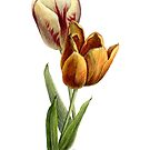 Tulips by NearBird