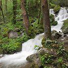 Wet Weather Cascades III by Gary L   Suddath
