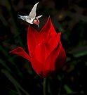 Night Crimson by Elaine Manley