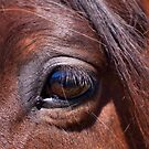 Eye See You - Horse Photography by Michelle Wrighton