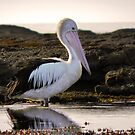 Pelican morning by Michelle Ricketts