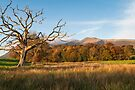 Skiddaw Tree by Stephen Miller