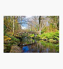 Ness Woods Bridge Photographic Print