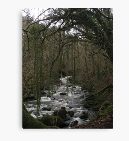 Reaching for water Canvas Print