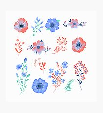 Floral Set of Beautiful Flowers and Leaves. Design elements for decoration Photographic Print
