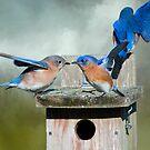 Bluebird Disco by Bonnie T.  Barry