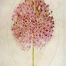 Allium Pink Jewel by John Edwards