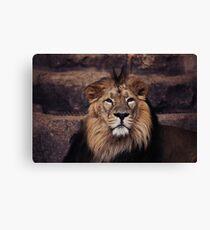 africa lion Canvas Print
