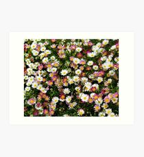 Candy Coloured Daisies Art Print
