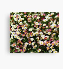 Candy Coloured Daisies Canvas Print