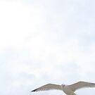 seagull by RavensLanding