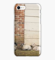 Lambs iPhone Case/Skin