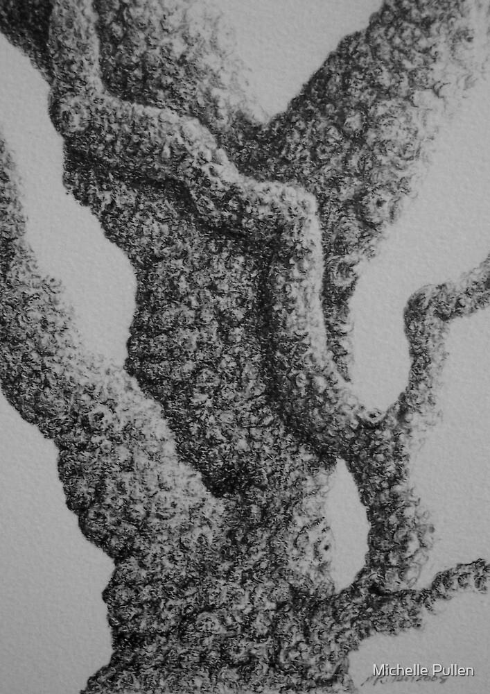 baksia by Michelle Pullen