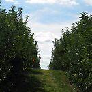 orchard lanes by RavensLanding