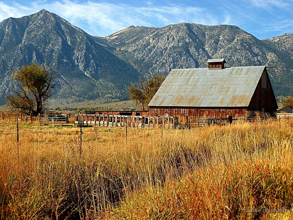 Old Country Barn by Elaine Bawden