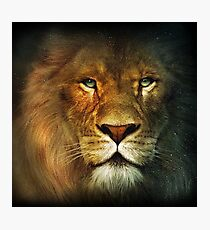 Narnia Lion Photographic Print