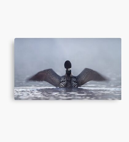 Blur - Common loon Metal Print