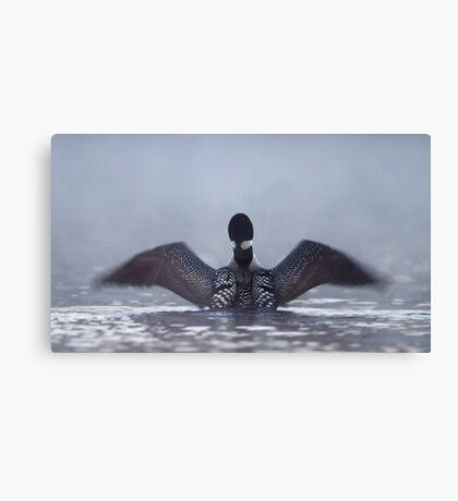 Blur - Common loon Canvas Print