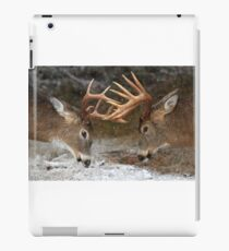 Clash of the Titans - White-tailed deer iPad Case/Skin