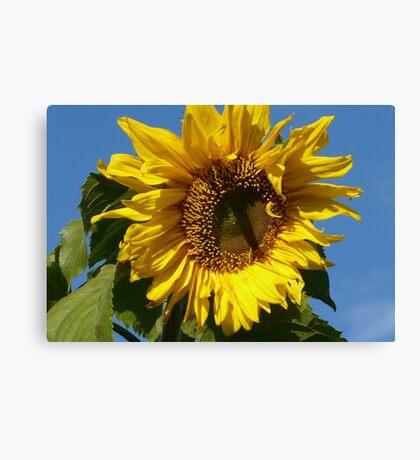 Sunny Sun Flower Canvas Print