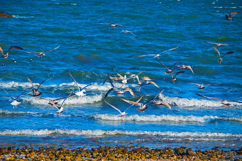 Flock Of Seagulls Taking Off | Mattituck, New York by © Sophie W. Smith