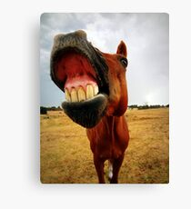 Red the smiling horse Canvas Print