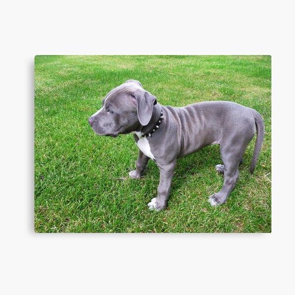 Dog Stamps Dog Tricks Dog Biscuit Trick Mounted Rubber Stamps Bone Canines