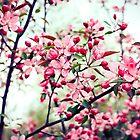 Vintage spring by baxiaart