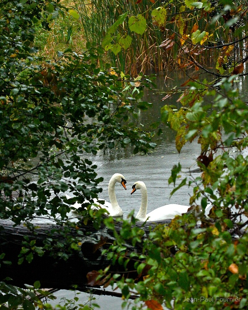 Heart Shaped Love Swans by Jean-Paul Fournier