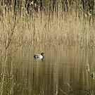 Duck in Spring by ienemien