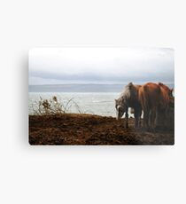 Wild horses in Donegal, Ireland Metal Print