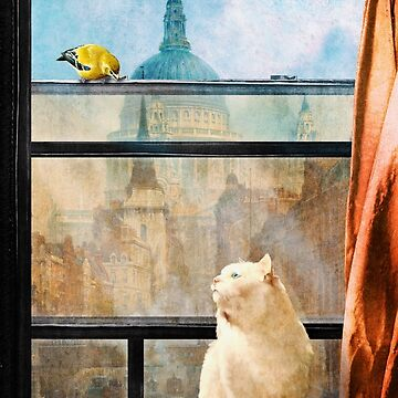 The Bird and the Cat by DVerissimo