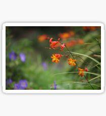 Montbretia, Orange Wild Flowers Sticker