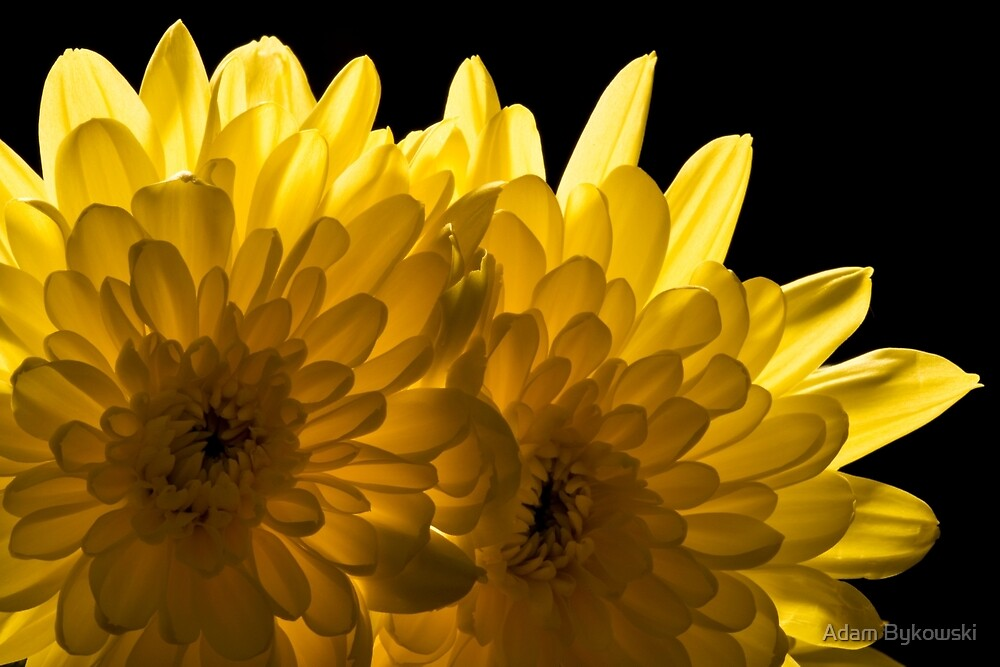 Shining Through by Adam Bykowski