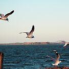 Island Seagulls by Sophia Covington
