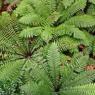 Tree Ferns - Looking Down From Above by Sophia Covington