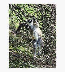 Just hanging around! Photographic Print