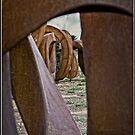 National Arboretum Canberra by Wolf Sverak