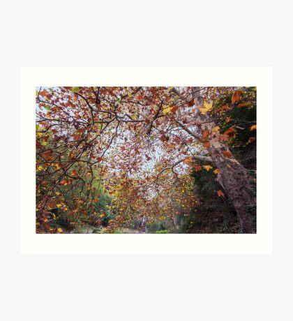 Autumn at Waterfall Gully Art Print