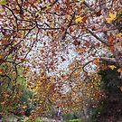 Autumn at Waterfall Gully by SD Smart