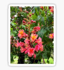 Hybrid Horse Chestnut Tree Sticker