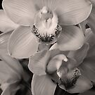 Orchids - Black and White by Sophia Covington