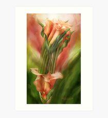 Peach Callas In Calla Vase Art Print