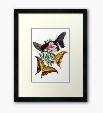 FF - Butterfly-3 Framed Print