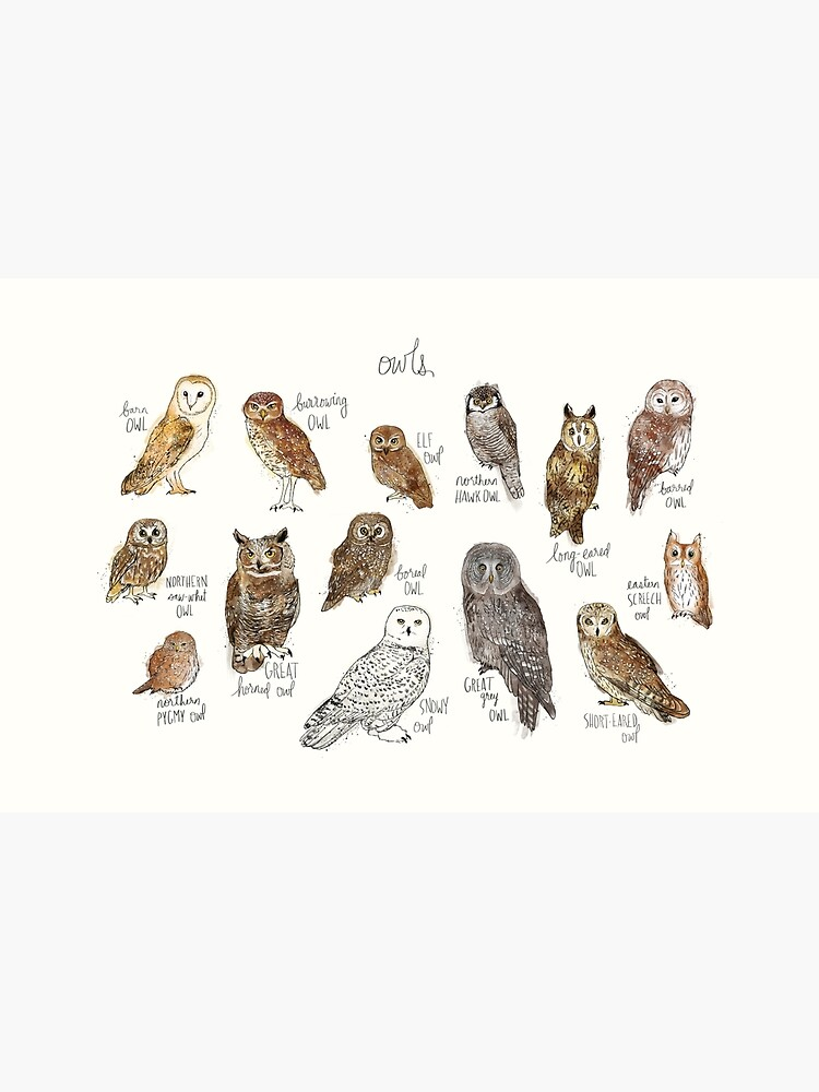 Owls by AmyHamilton
