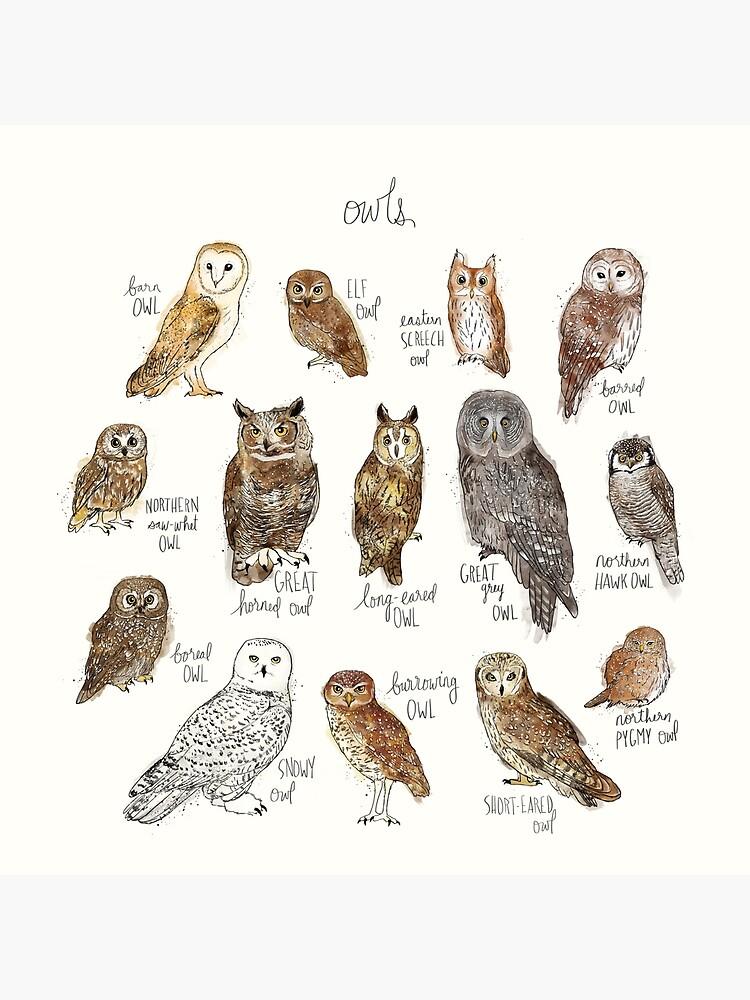 Owls by AmyHamilton