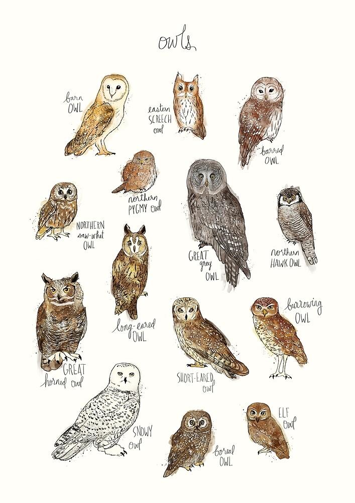 Owls by Amy Hamilton