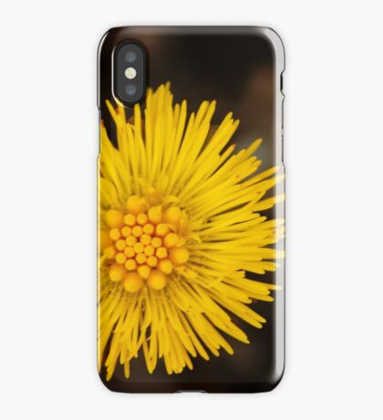 Spring's first little suns  iPhone Case/Skin