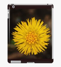 Spring's first little suns  iPad Case/Skin