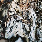 Fallen Log by Sophia Covington